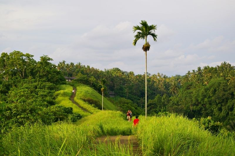 Green walk in Bali, Ubud