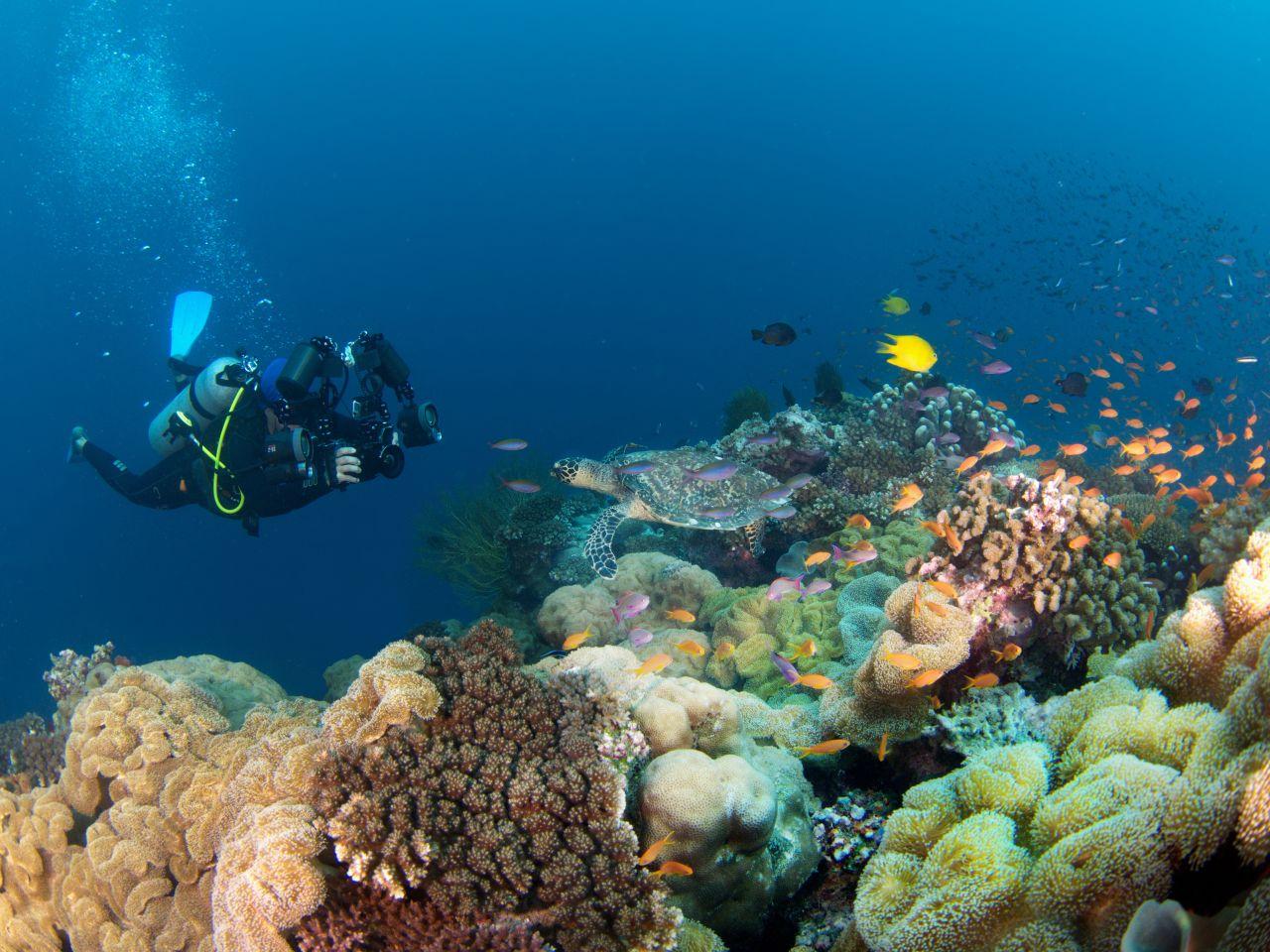 Nardymas Fidžyje - vėžlys