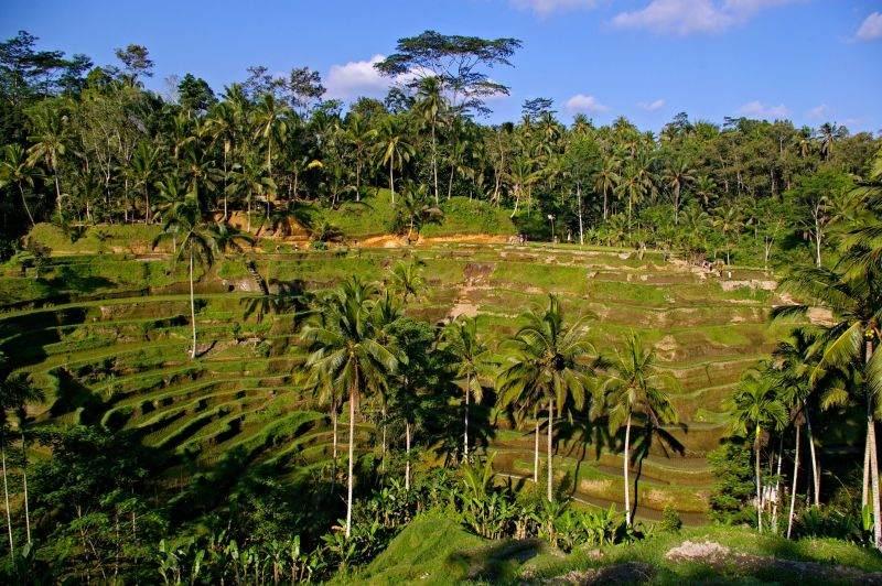 Tegalalang rice terrace - Bali trip
