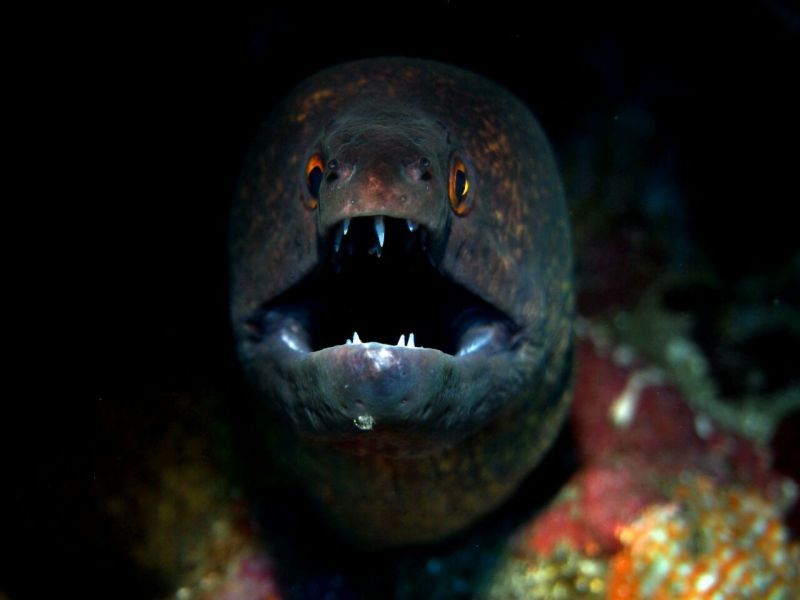 Moray eel - diving site