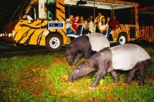 Naktinis safaris